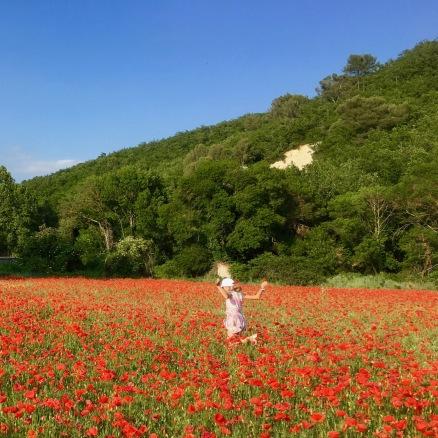 Poppy field / pea farm outside Lourmarin
