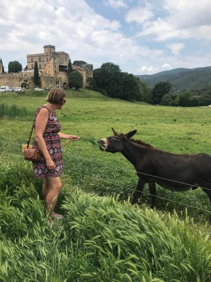 Svet and the donkey in Lourmarin