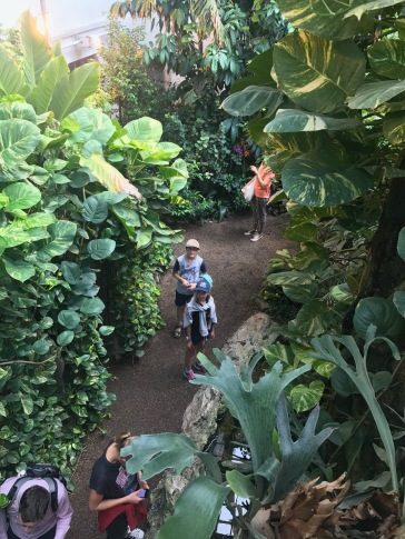Oli and Lucy explore the butterfly enclosure.